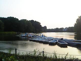 08年7月22日、夕方の石神井公園ボート池