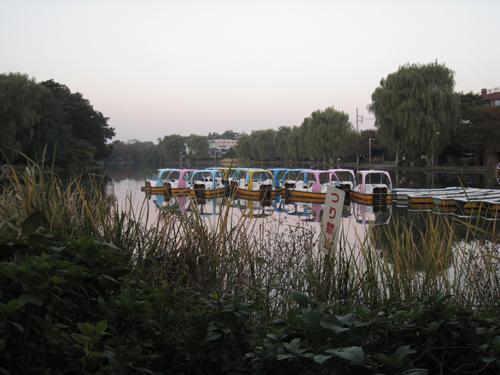 08年11月6日 朝6時の石神井公園