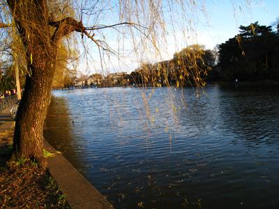冬の石神井公園。左に釣竿