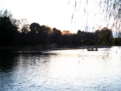 冬の石神井公園3。手漕ぎボートに乗っているカプル