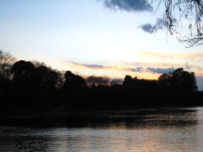 冬の石神井公園4。日没直後