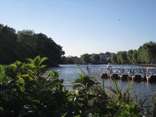 08年11月1日の石神井公園 ボート池